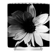 Propose Put Forward  Shower Curtain