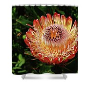 Protea Flower 2 Shower Curtain