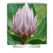 Protea Flower Blossoming Shower Curtain