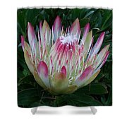 Protea Flower Shower Curtain