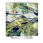 Protea Repens Maui Hawaii Sugarbush Shower Curtain
