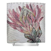 Protea Study 1 Shower Curtain