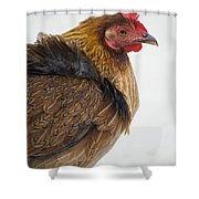 Protected Poultry In Key West Key West Shower Curtain