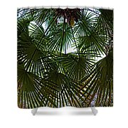 Protecting Palms Shower Curtain