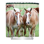 Protective Shower Curtain