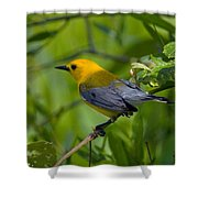 Prothonotary Warble Dsb071 Shower Curtain
