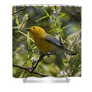 Prothonotary Warbler Dsb220 Shower Curtain