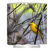 Prothonotary Warbler Shower Curtain