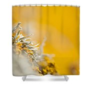 Protruding Shower Curtain
