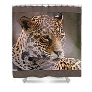 Out Of Africa Shower Curtain