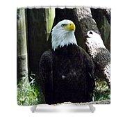 Proud Eagle Shower Curtain