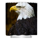 Proud Eagle Profile Shower Curtain by Athena Mckinzie
