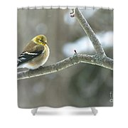 Proud Finch Shower Curtain