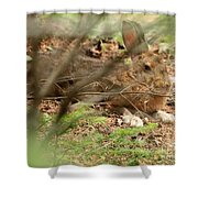 Proud Hare Shower Curtain