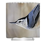 Proud Nuthatch... Shower Curtain