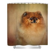 Proud Pomeranian Shower Curtain
