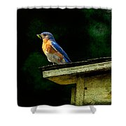 Proud Provider Shower Curtain