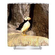 Proud Puffin Shower Curtain