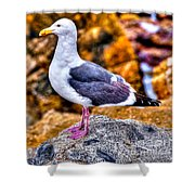 Proud Thayer Gull Shower Curtain