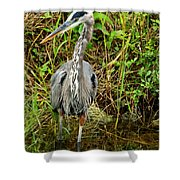 Proud Heron Shower Curtain