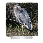 Pround Blue Heron Shower Curtain