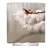Prunus Hirtipes Shower Curtain