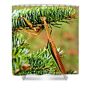 Prying Mantis On The Pine Tree Shower Curtain