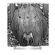 Przewalski's Horse Shower Curtain