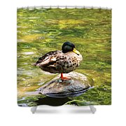 Psychedelic Duck  Shower Curtain