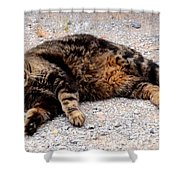 Psycho The Cat Shower Curtain