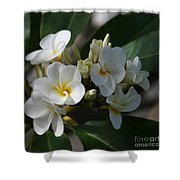 Pua Melia Na Puakea Onaona Tropical Plumeria Shower Curtain