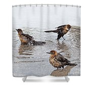 Public Bath  Shower Curtain