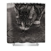 Puddle Drinking Kitty Shower Curtain