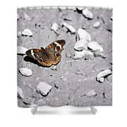 Puddling Butterfly 8766 Shower Curtain