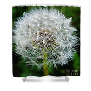 Puff The Dandelion Shower Curtain
