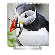 Puffin With Fish Shower Curtain