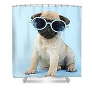 Pug Cool Shower Curtain by Greg Cuddiford