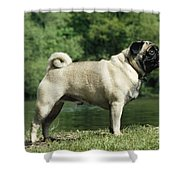 Pug Dog Shower Curtain