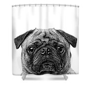 Pug Dog Square Format Shower Curtain