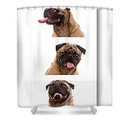 Pug Photo Booth Shower Curtain
