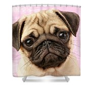Pug Portrait Shower Curtain by Greg Cuddiford