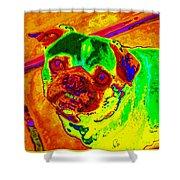 Pug Portrait Pop Art Shower Curtain