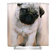 Pug Puppy Dog Shower Curtain