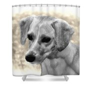 Puggles Shower Curtain by Bill Cannon