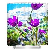 Pulsatilla Vulgaris Flowers Shower Curtain