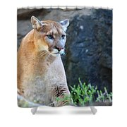 Puma On The Watch Shower Curtain