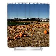 Pumpkin Field Shower Curtain