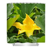 Pumpkin Flower Shower Curtain