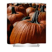 Pumpkin Harvest 1 Shower Curtain