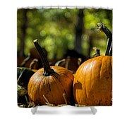 Pumpkin Line Up Shower Curtain
